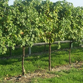 Products for Vineyards and Gardens